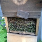 2012年5月「シジュウカラ」 今年も営巣が始まりました。