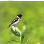 「野の鳥は野に」 日本野鳥の会スローガン